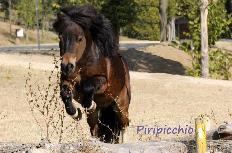 Piripicchio