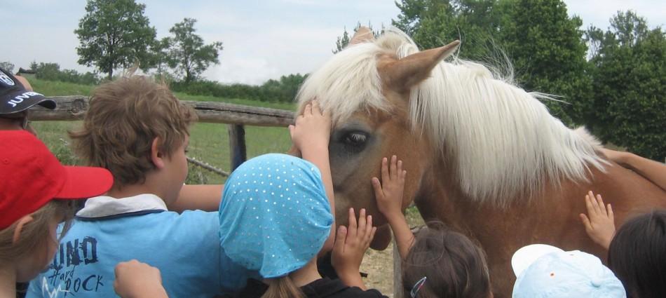 foto  bambini e cavalli_3295