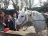 cavalli-1