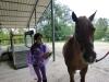 cavalli-4