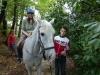 cavalli-5