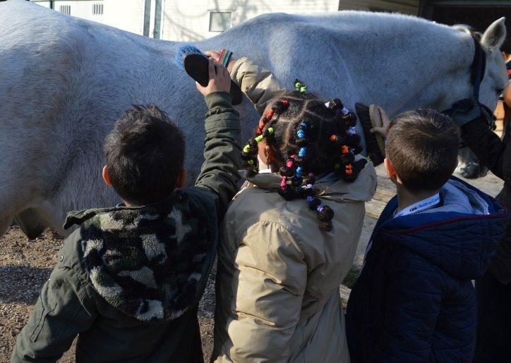 """""""Interventi assistiti con il cavallo: una risorsa per il territorio"""""""